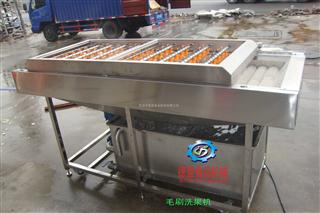 DY2500毛刷式洗果机、鼓泡式洗果机